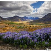 Iceland - The Westfjords