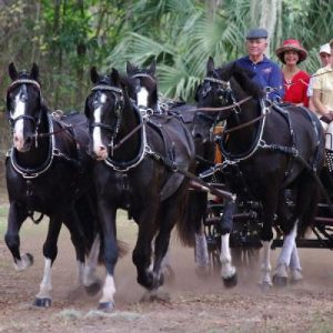 American Carriage Association Show
