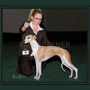 THE WHIPPET CLUB CHAMP SHOW 2010