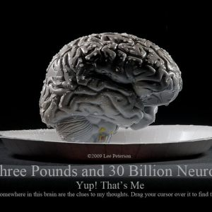 3 Pounds and 30 Billion Neurons
