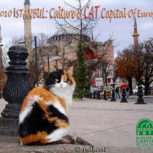 Culture and CAT Capital of Europe