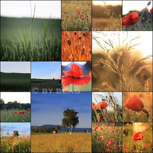 SWITZERLAND - MOHN / LANDSCAPE