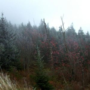 Clingmans Dome, October, 2013