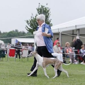 SOUTHERN COUNTIES CHAMPIONSHIP DOG SHOW 2012